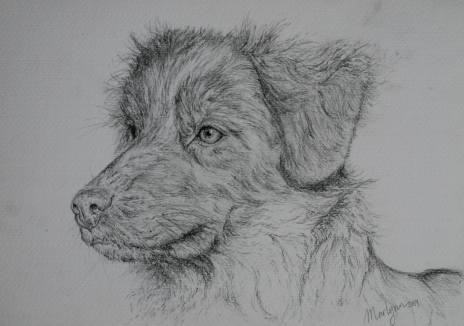 ''Chienna''. A4, graphite pencil, 2014 [private collection]
