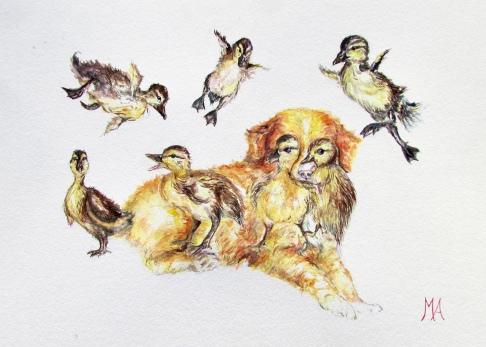 ''Nova Scotia Duckling Retriever'' A4, watercolours [available]