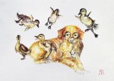 ''Nova Scotia Duckling Retriever''. A4, watercolours, 2020 [available]